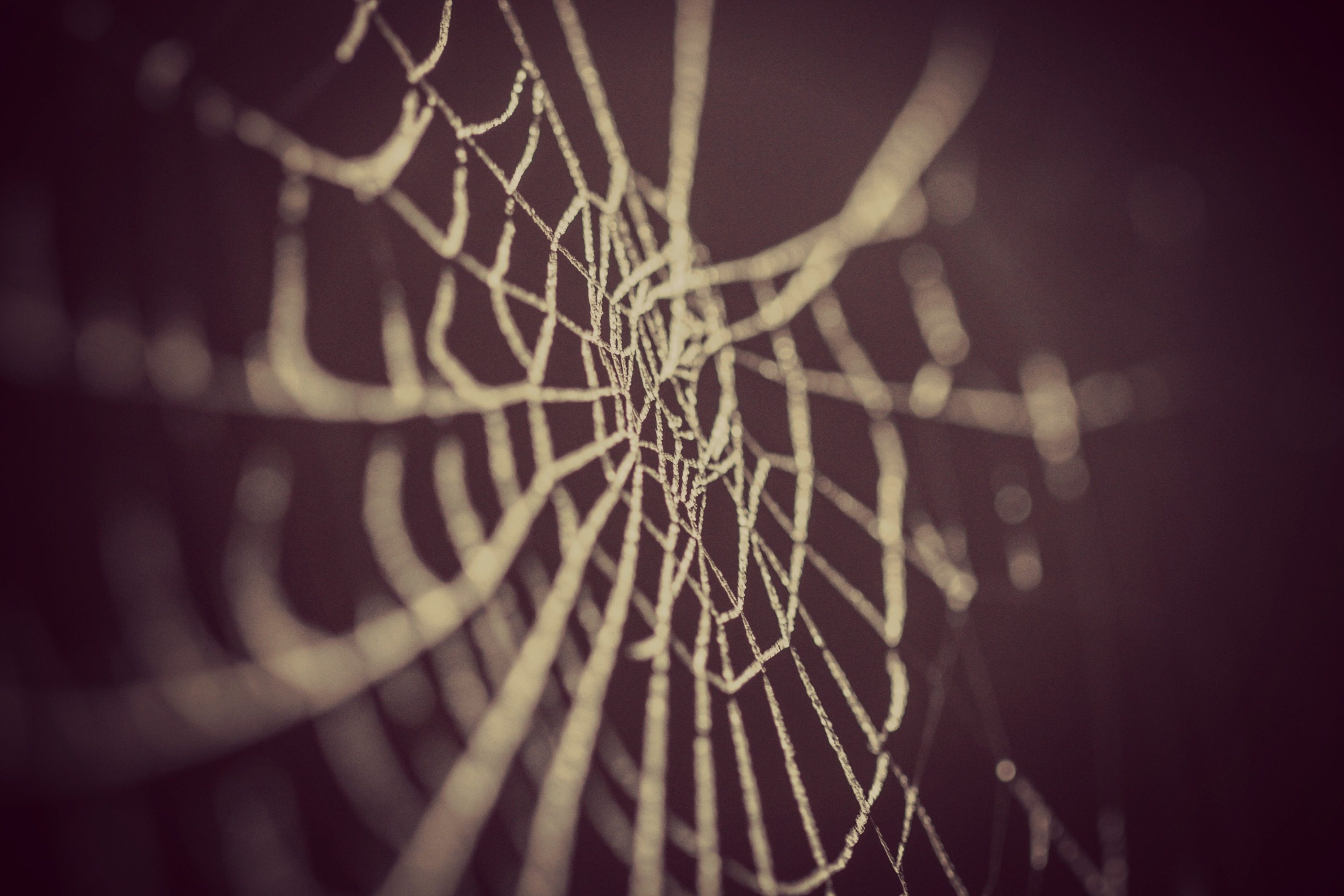 Spiderweb - Network Marketing